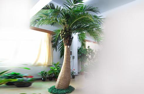 Những loại cây trang trí nội thất bạn không thể bỏ qua