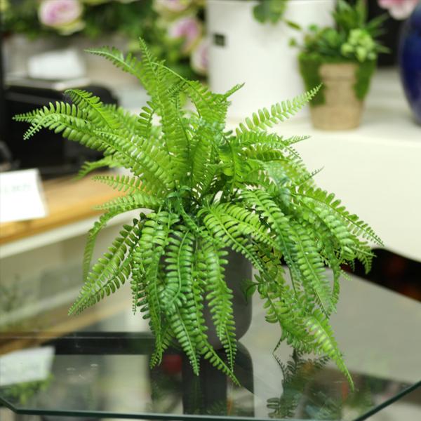 Cây dương xỉ trong phong thủy - Những thông tin nên biết