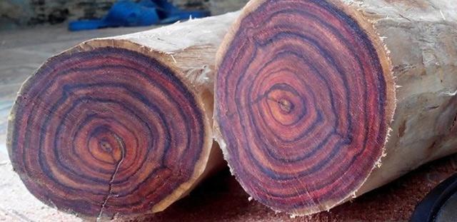 Hướng dẫn cách nhận biết các loại gỗ quý chi tiết nhất