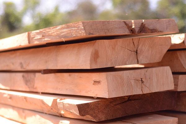 Mách bạn cách phân biệt 10 loại gỗ tự nhiên ngay tức khắc
